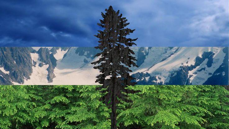 Cascadia Convergence Flag